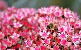 Sussex bee scientists question value of neonics ban