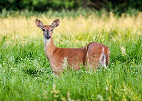 Targeted culling of deer controls disease with little effect on hunting
