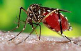 Temperature changes effect growth of dengue mosquito