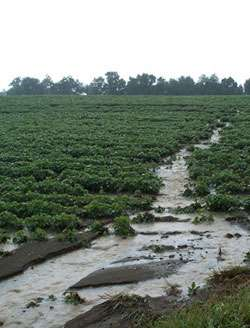 Tillage and reduced-input rotations affect runoff from agricultural fields