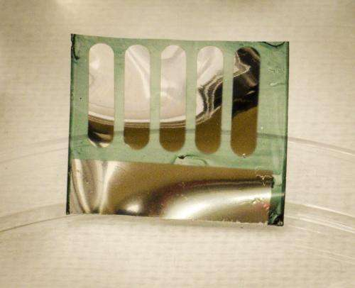 Trees used to create recyclable, efficient solar cell