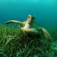 Turtle expert's research reveals animal welfare issues at farm