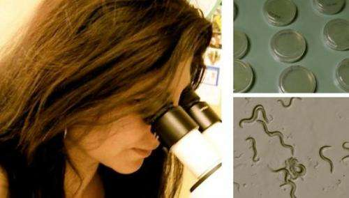 UNM researchers study spontaneous mutations with implications across biology
