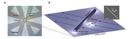 Using single quantum dots to probe nanowires