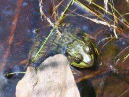 What amphibians tell us about arsenic levels in the environment
