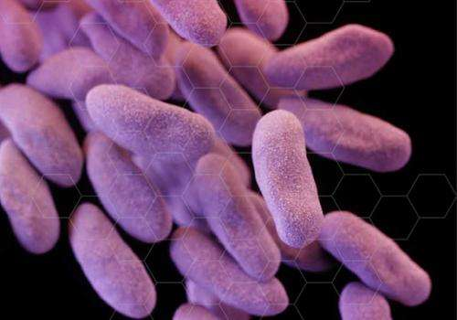 When bacteria fight back