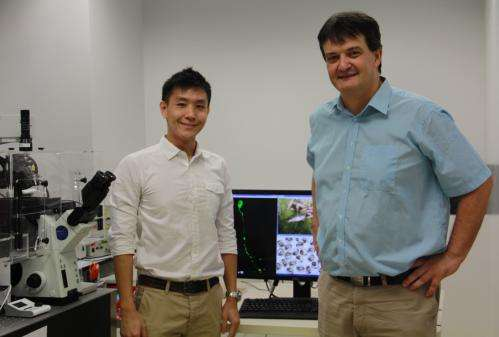Study led by NUS scientists provides new insights into cause of human neurodegenerative disease