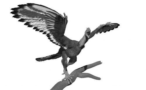 X-rays reveal new picture of 'dinobird' plumage patterns