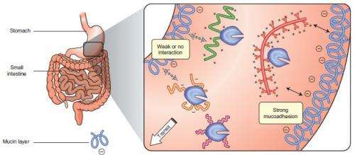 Polymers could help enzymes treat diseases