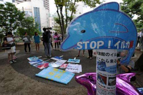 A placard reading 'Stop! Dolphin hunt' is displayed during a protest in central Tokyo on August 31, 2014 against an annual dolph