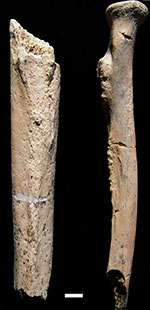 Biology of early human relative uncovered