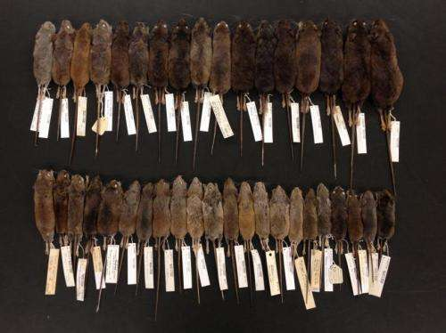 Collecting biological specimens essential to science and conservation