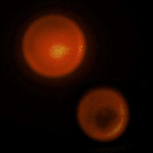 Controlled laser cavitation creates new possibilities for local drug delivery