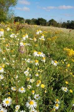 Ecological benefits of gardening wildflowers