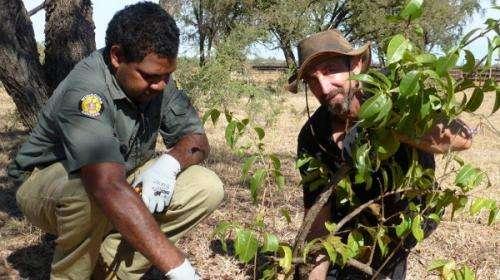 Eradication efforts unite to preserve fairy-wren population
