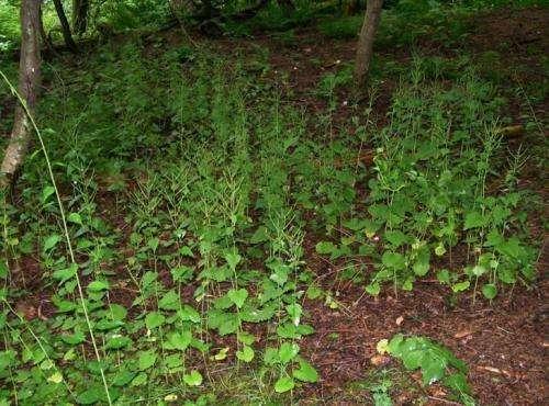 Excessive deer populations hurt native plant biodiversity