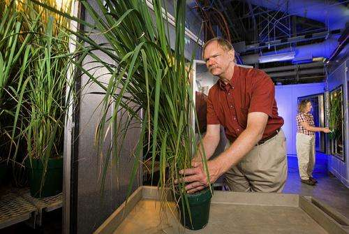 Finding rice traits that tackle climate-change challenges