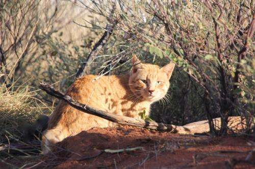 How to control the cats that are eating our wildlife