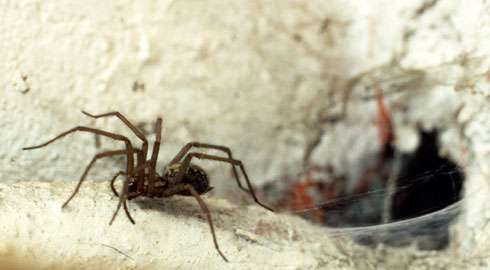 Invasion of the giant spiders? Not quite