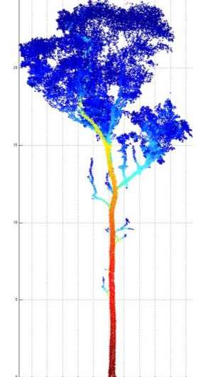 Laser scanning accurately 'weighs' trees