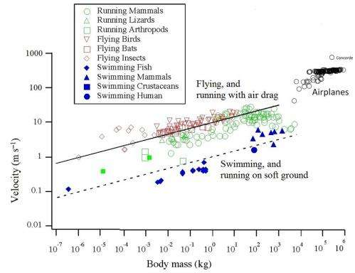 Law of physics governs airplane evolution