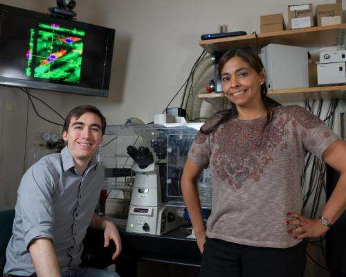 Ovarian cancer cells are more aggressive on soft tissues
