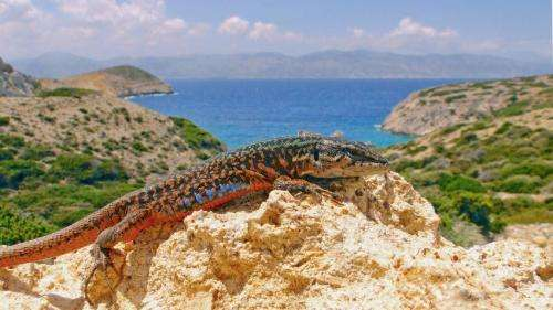 Predators and isolation shape the evolution of 'island tameness,' providing conservation insights