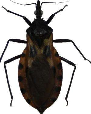 Project aims to turn mobile phones into detectors of disease-spreading insects