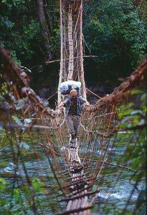 Protecting Myanmar's rich plant biodiversity is major goal of new NYBG program