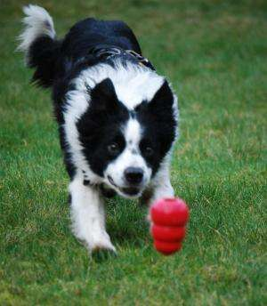 Research could lead to new cancer assay, aid both dogs and humans