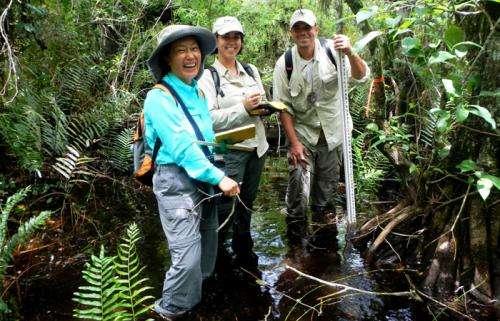 Researcher restores Florida's endangered cigar orchids