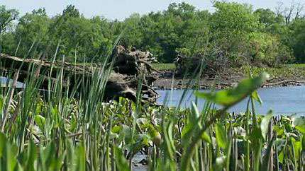 Studying how marshes respond to sea-level rise