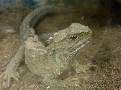 There's no such thing as reptiles any more – and here's why