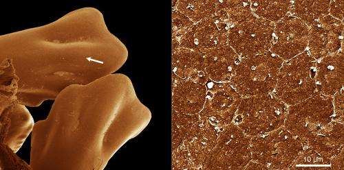 Turning biological cells to stone improves cancer and stem cell research