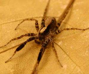 We Shouldn't Fear the Big, Bad Wolf (Spider, That Is)