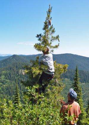 Citizen science key to keeping pace with environmental change