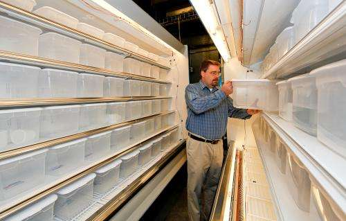 Researchers look to carbon dioxide as a more environmentally friendly refrigerant gas
