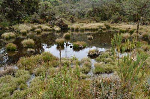 South American lichen found to have 126 different species of fungi
