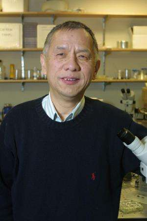 Scientists unravel mystery of brain cell growth