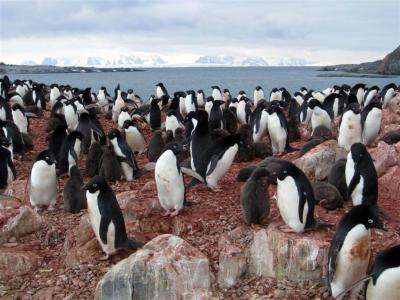 Study reveals strong links between Antarctic climate, food web