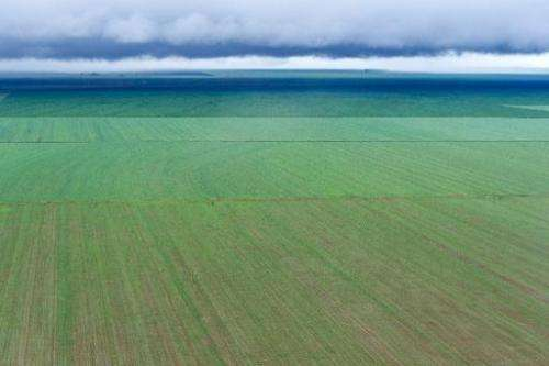 Aerial view of a soy bean field, in Campo Novo do Parecis, about 400km northwest from the capital city of Cuiaba, in Mato Grosso