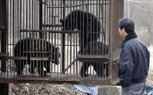 Bear bile-extracting farms near collapse in SKorea