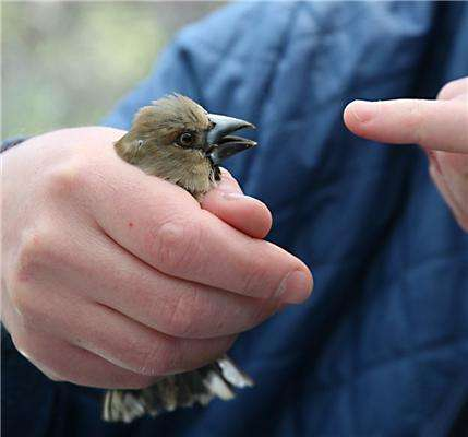 Chernobyl's birds are adapting to ionising radiation