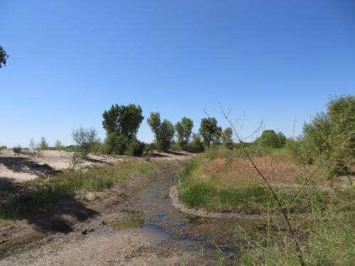 Colorado River Delta greener after engineered pulse of water