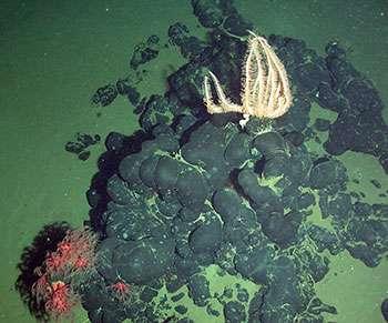Deep-sea asphalt mounds found off west African coast