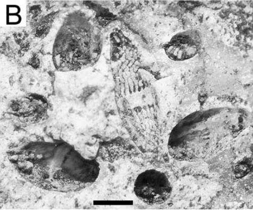 Grinding away at history using 'forensic' paleontology and archeology