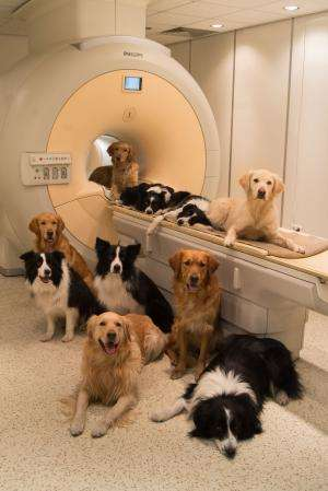 Human and dog brains both have dedicated 'voice areas'