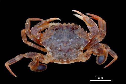 Long-term studies reveal drastic changes in the marine fauna of the North Sea