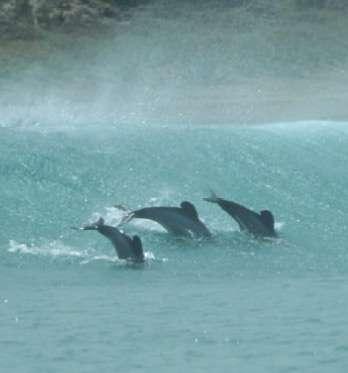 Maui's dolphin faces extinction unless action is taken now
