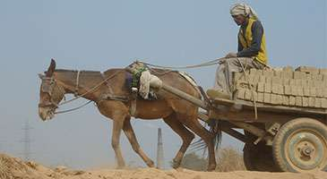 New research could help the welfare of working animals